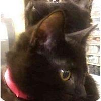 Adopt A Pet :: Jangle - Annapolis, MD