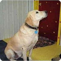 Adopt A Pet :: Cody - Rigaud, QC