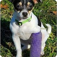 Adopt A Pet :: Abella - Oklahoma City, OK