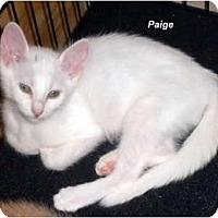 Adopt A Pet :: Paige - Jacksonville, FL