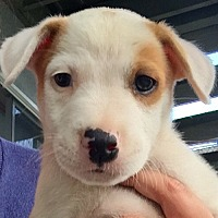 Adopt A Pet :: Rufus - Long Beach, CA
