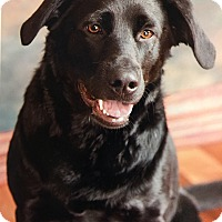 Adopt A Pet :: *Cookie - PENDING - Westport, CT