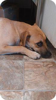 Labrador Retriever/Hound (Unknown Type) Mix Puppy for adoption in Darlington, South Carolina - Emma