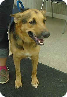 German Shepherd Dog Mix Dog for adoption in Somerset, Pennsylvania - Magic