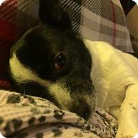 Adopt A Pet :: Danny--ADOPTED!! - Lynnwood, WA