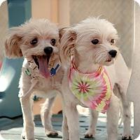 Adopt A Pet :: Mimi - Vidor, TX