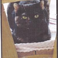 Adopt A Pet :: Katie Belle - Calimesa, CA
