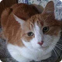 Adopt A Pet :: Elmer (Special Needs; no fee) - Witter, AR
