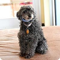 Adopt A Pet :: Madi - Denver, CO