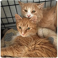 Adopt A Pet :: Reagan and Riley - Milford, MA