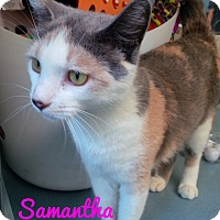 Adopt A Pet :: Samantha - Jackson, NJ