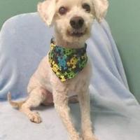 Adopt A Pet :: Odis - Killeen, TX