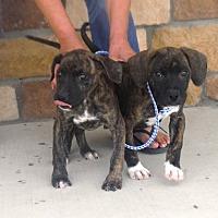 Adopt A Pet :: Mary - Artesia, NM