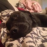 Adopt A Pet :: Maizie--Oklahoma City, OK - Fulton, MO