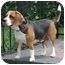 Photo 3 - Beagle Dog for adoption in Palm Bay, Florida - Fiona