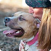 Adopt A Pet :: Annie - Seattle, WA