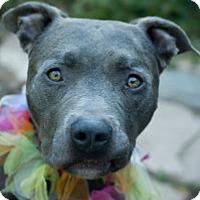 Adopt A Pet :: Sparky - Sacramento, CA