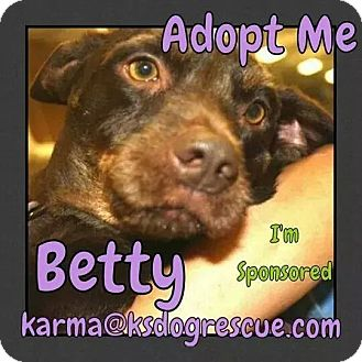 Corgi/Terrier (Unknown Type, Small) Mix Dog for adoption in Cheney, Kansas - Betty