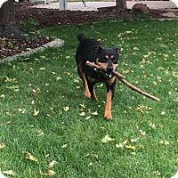Adopt A Pet :: Neon - Meridian, ID