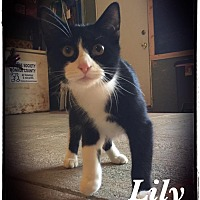 Adopt A Pet :: Lilly - Woodsfield, OH