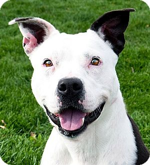 Pit Bull Terrier Mix Dog for adoption in Meridian, Idaho - Mary