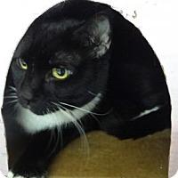 Adopt A Pet :: FRENCHIE - Tucson, AZ