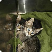 Adopt A Pet :: Nemo - Colonial Heights, VA