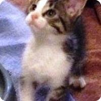 Adopt A Pet :: Sheldon - Lebanon, PA