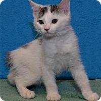 Adopt A Pet :: Gus - Lenexa, KS