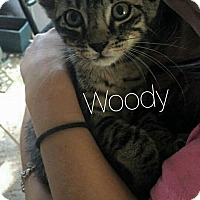 Adopt A Pet :: Woody - Wichita Falls, TX
