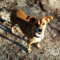 Adopt A Pet :: Momma - Irmo, SC