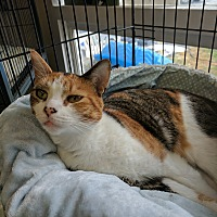Adopt A Pet :: Miss Daisy - Middletown, NY