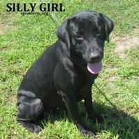 Adopt A Pet :: Silly Girl - Elizabeth City, NC
