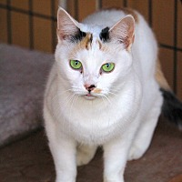 Adopt A Pet :: Aransas - Colorado Springs, CO