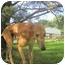 Photo 4 - Greyhound Dog for adoption in Chagrin Falls, Ohio - Fly (Flyin Cranbourne)