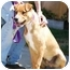 Photo 2 - Labrador Retriever Mix Puppy for adoption in Berkeley, California - Drake