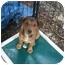 Photo 2 - Shepherd (Unknown Type)/Terrier (Unknown Type, Medium) Mix Puppy for adoption in Fair Oaks Ranch, Texas - GasStationPups