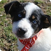 Adopt A Pet :: Samantha Jones - Wytheville, VA