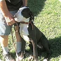 Adopt A Pet :: Duchess - York, PA