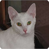 Adopt A Pet :: Twinkle - Richfield, OH