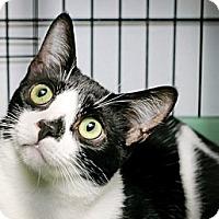 Adopt A Pet :: Chester - Havana, FL