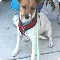 Adopt A Pet :: Ricki - Umatilla, FL