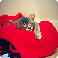 Adopt A Pet :: Stanley - Homewood, AL