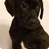 Adopt A Pet :: Buddy - Elkton, MD