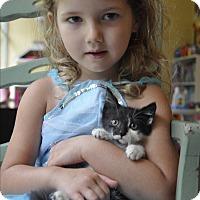 Adopt A Pet :: LEONARD! - New Smyrna Beach, FL