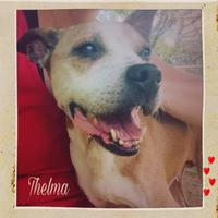 Adopt A Pet :: Thelma - Chattanooga, TN