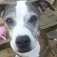 Adopt A Pet :: Kay - I'm a hurricane Irma orphan - Spartanburg, SC
