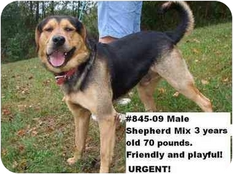 Shepherd (Unknown Type) Mix Dog for adoption in Zanesville, Ohio - # 845-09 ADOPTED!