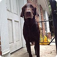 Adopt A Pet :: Koda - Cumming, GA
