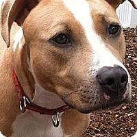 Adopt A Pet :: ZEKE - Dennis, MA